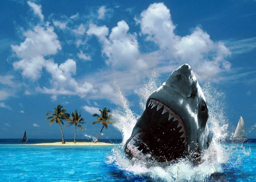 Shark ♥ ~ - Sharks Wallpaper (10311334) - Fanpop