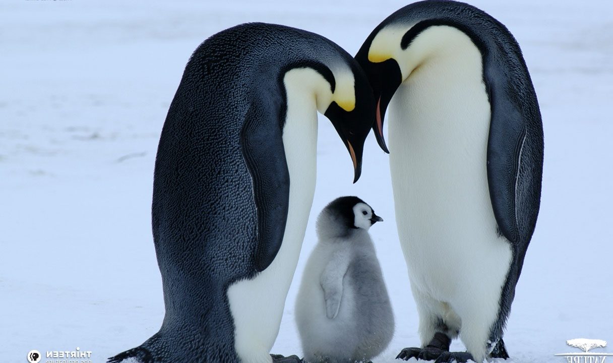 Cute Penguins | Cute Mighty Pictures
