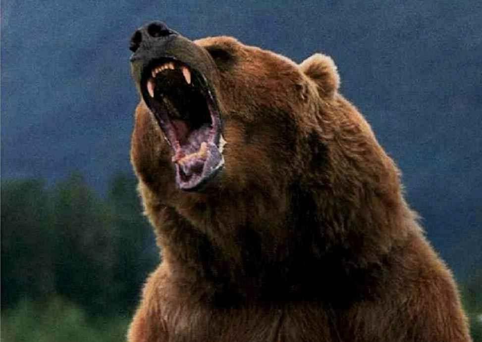 How to Win a Fight Against a Grizzly Bear by Choking the Sh*t Out of ...