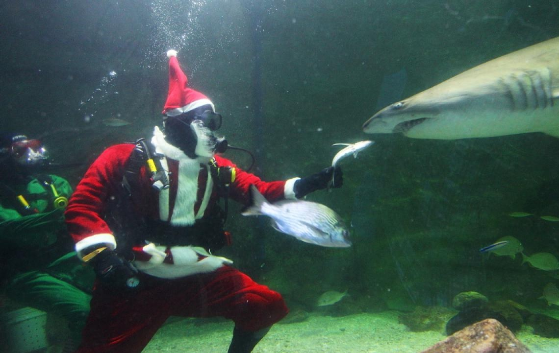 Animals celebrate Christmas - Animals get into the Christmas spirit ...