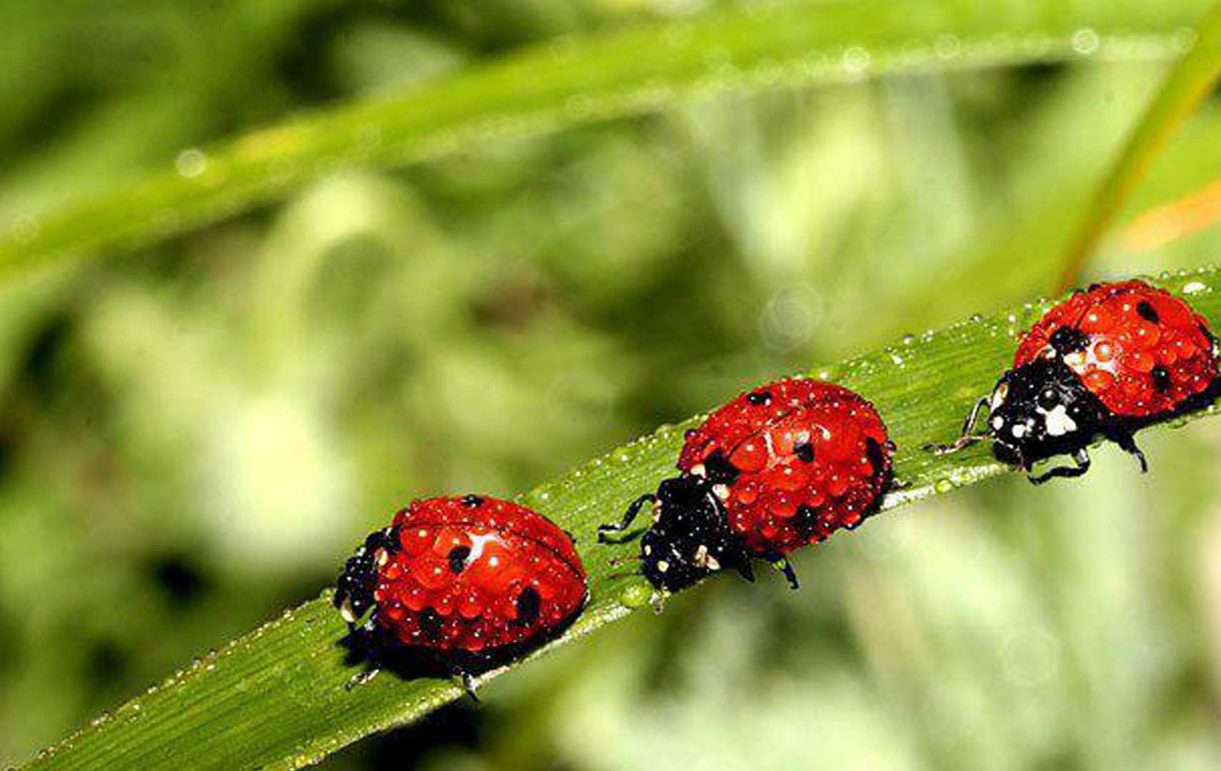 ladybugs picture