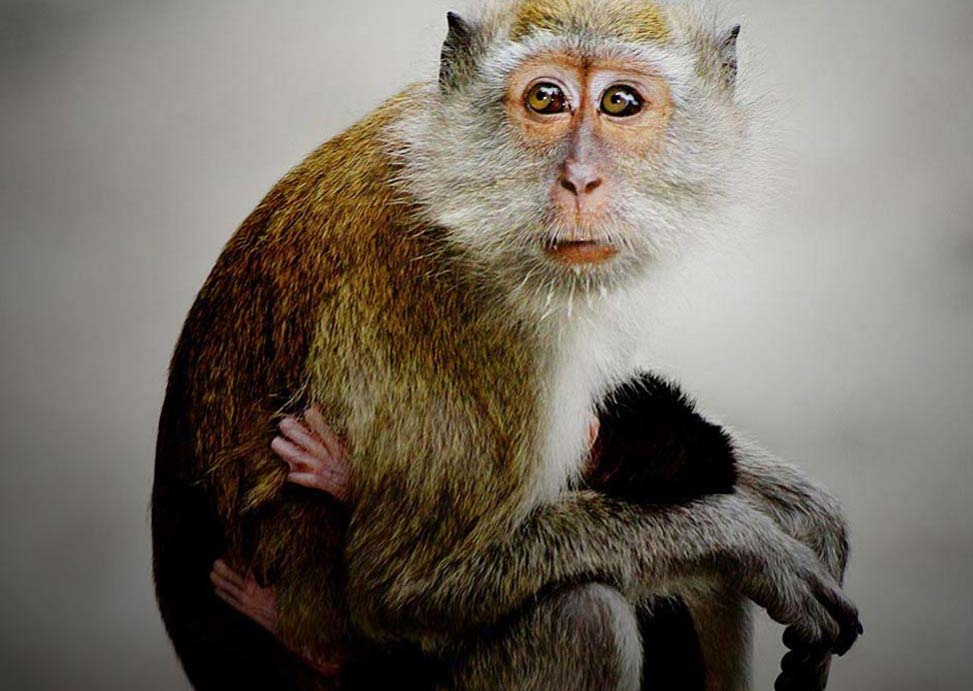 ... Animals blogs: Baby Monkey Wallpapers, Monkey Baby Funny Wallpapers