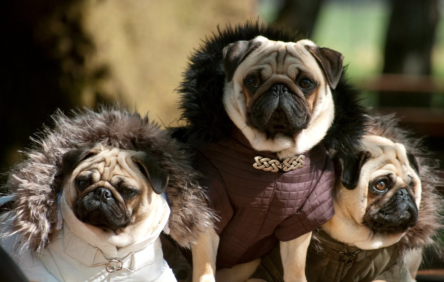 MIKE KAGEE FASHION BLOG: VALENTINO'S LOVE FOR PUGS by Mike Kagee