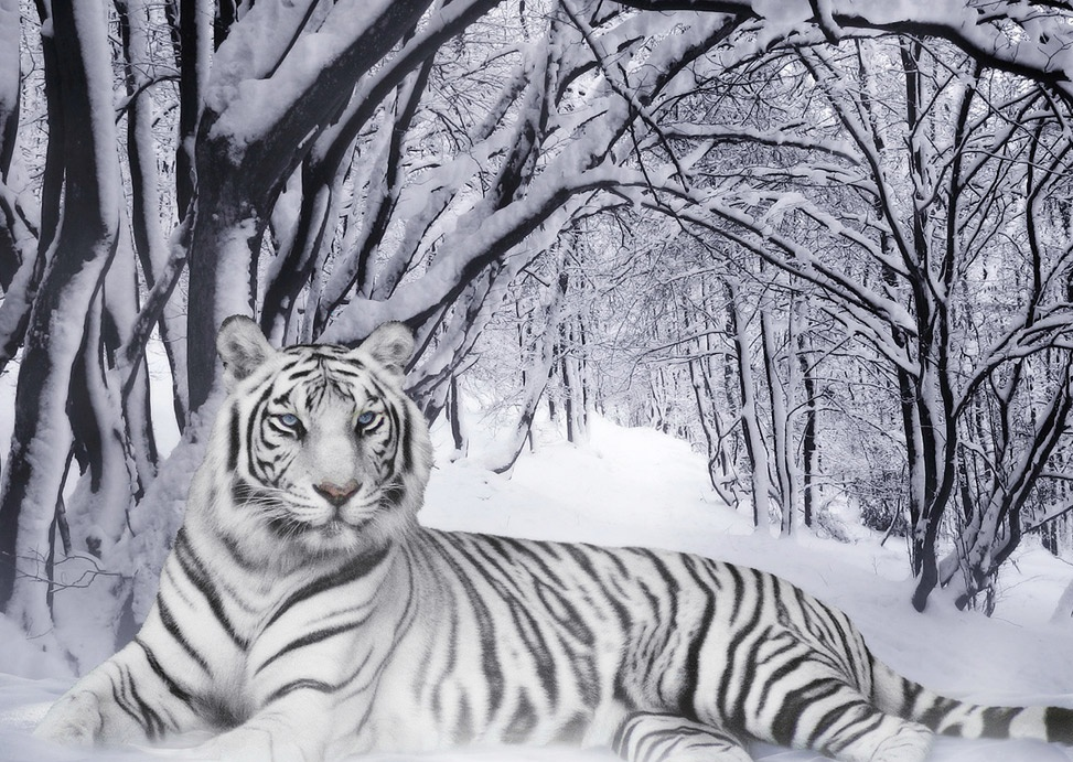 wild animals wallpapers | My HD Animals