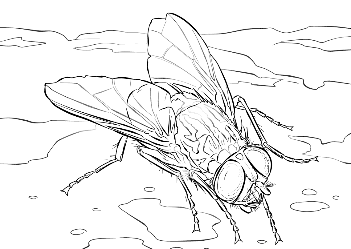 house fly coloring pages - photo #28