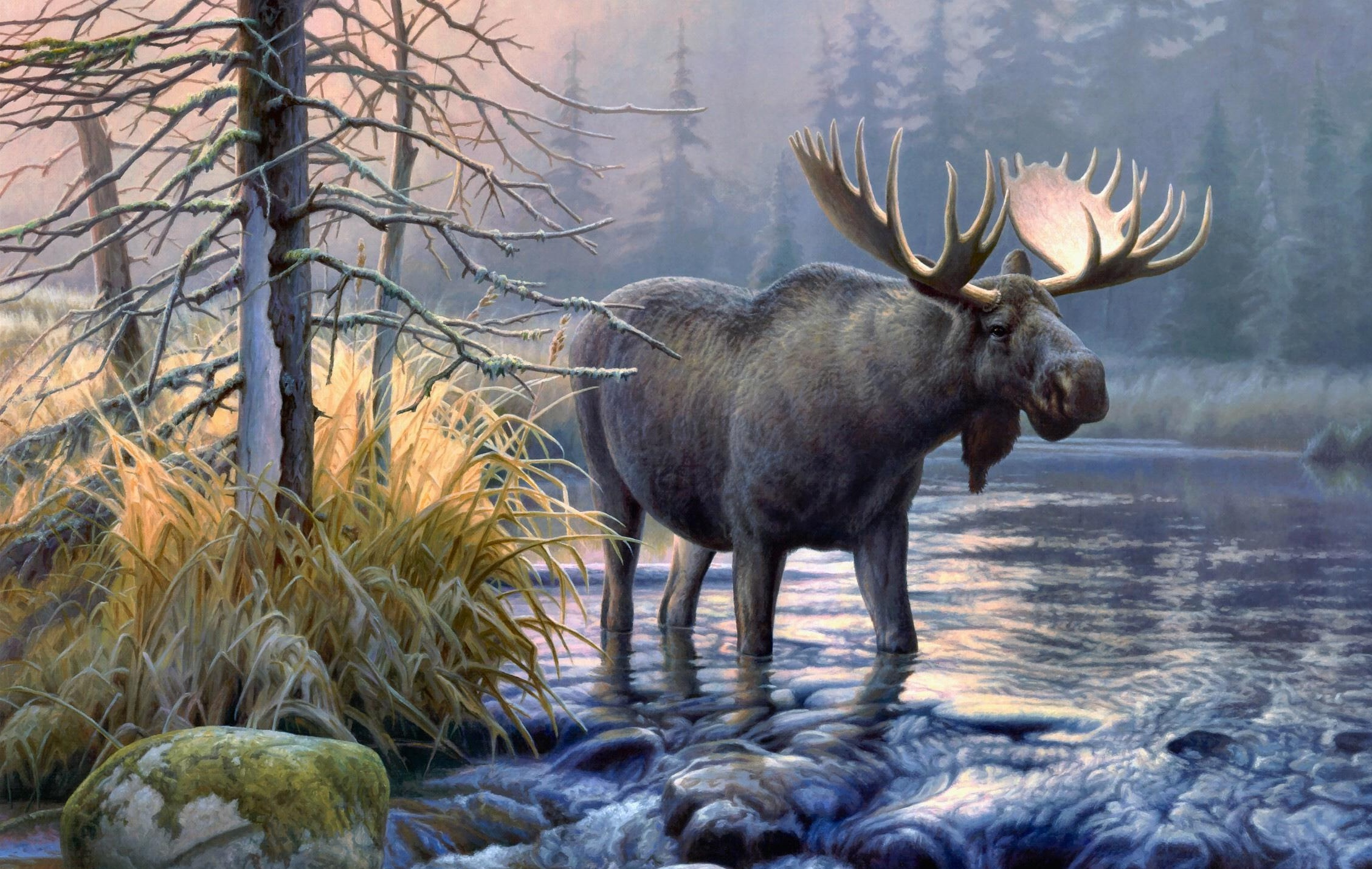 moose hd wallpaper - photo #30
