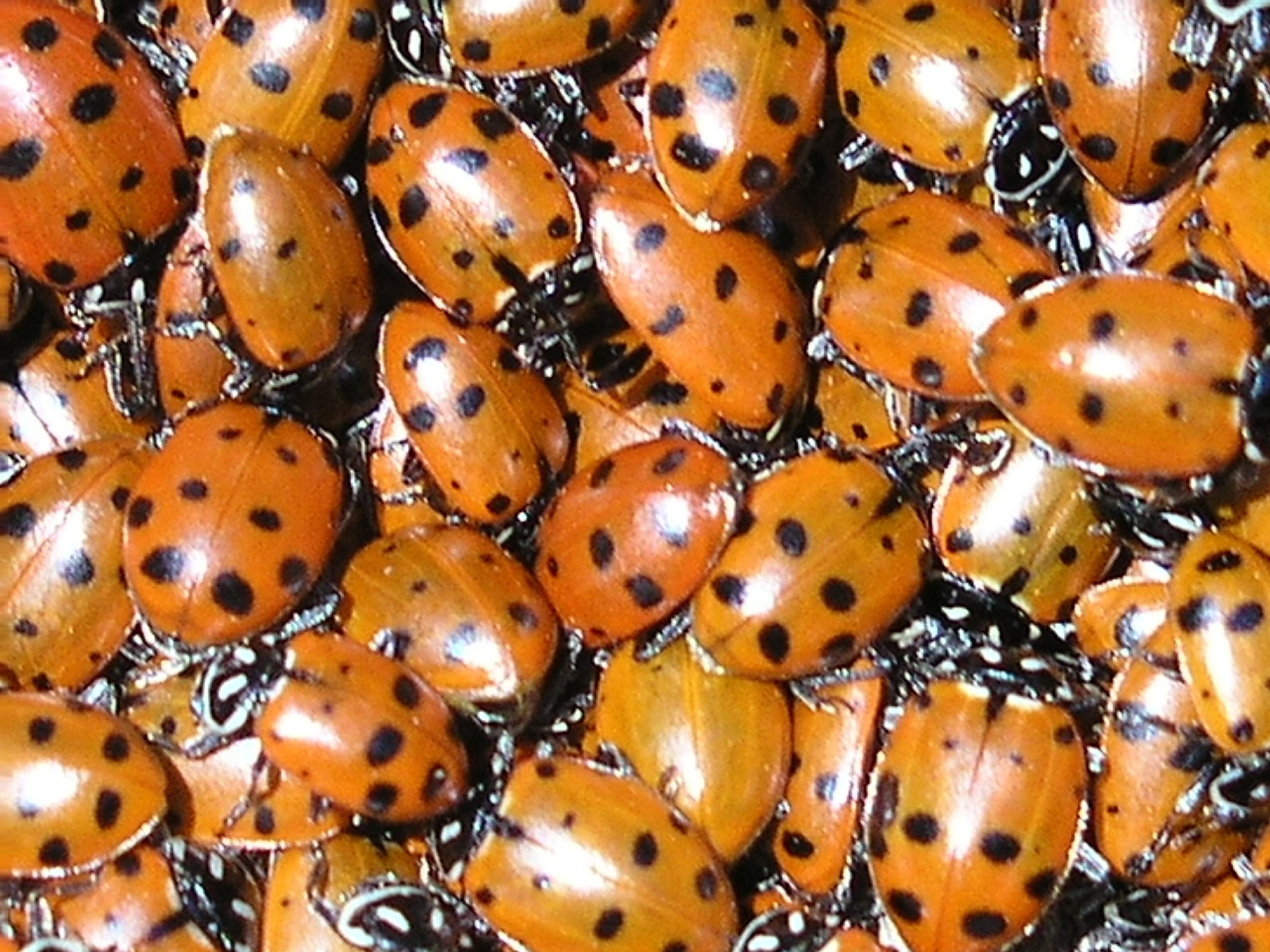 The scientific name for ladybug is Coccinellidae. Sounds romantic, eh?