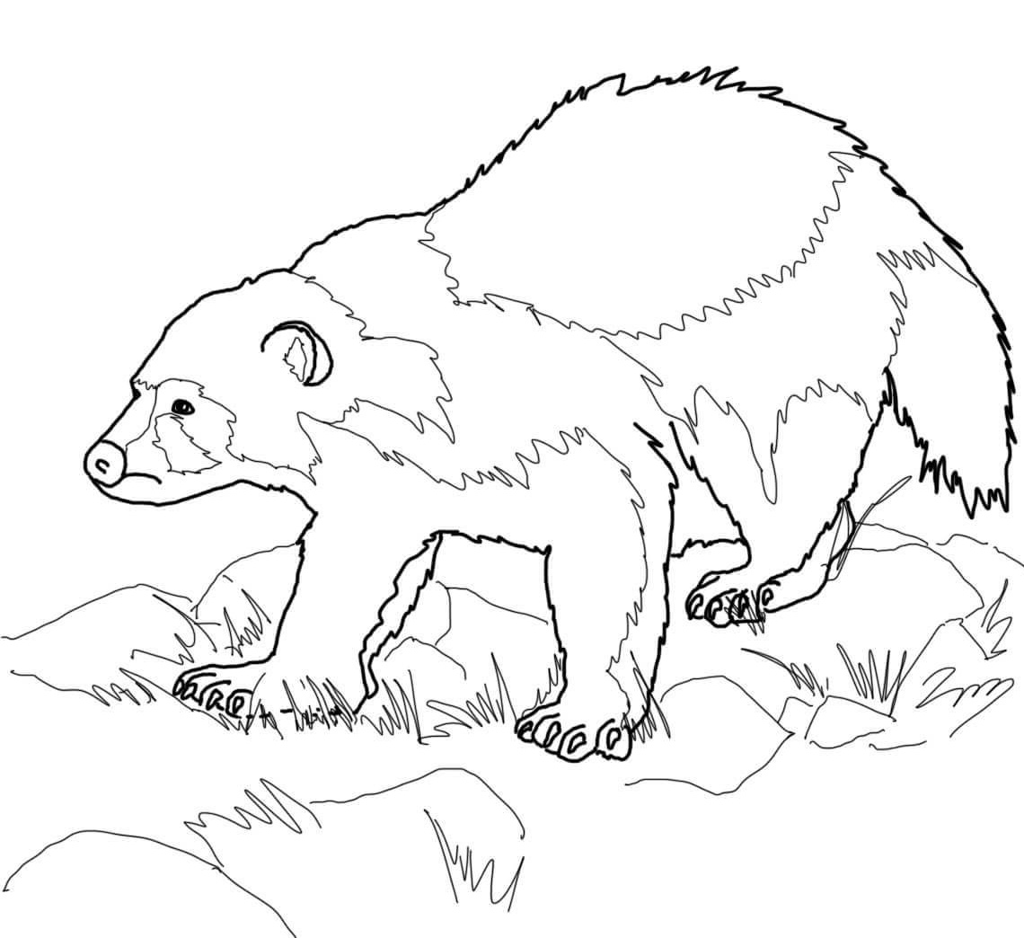 30 Wolverine Coloring Pages Coloringstar Coloring Coloring Pages