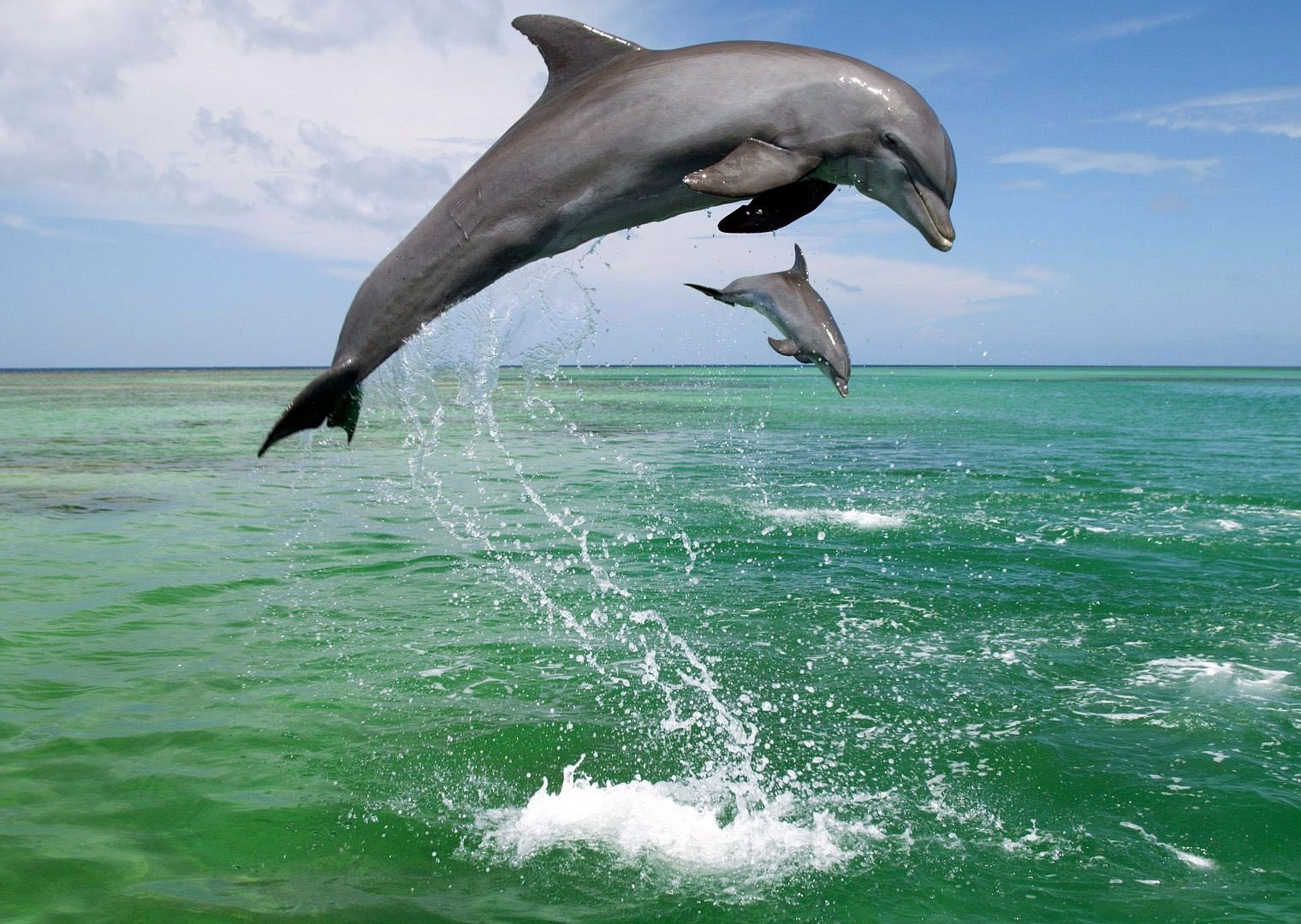 dolphin fish hd wallpapers.jpg - Wallpaperss HD