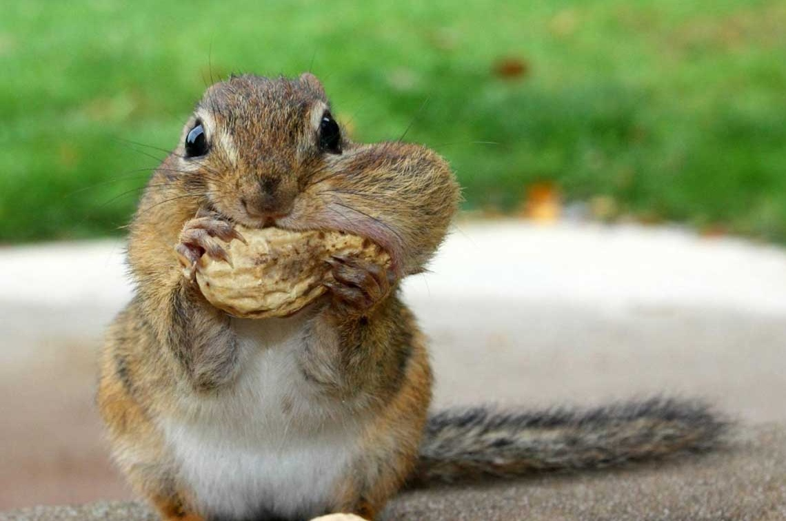 Funny Squirrel Pictures With Captions | loopele.com