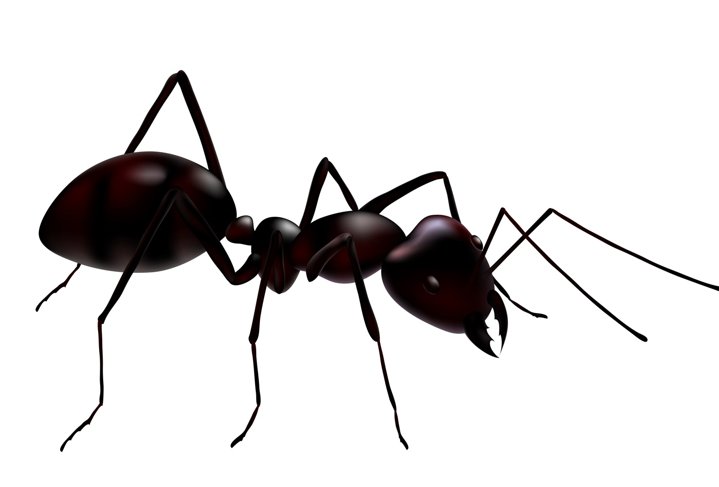 Ants - Pictures, Diet, Breeding, Life Cycle, Facts, Habitat, Behavior ...