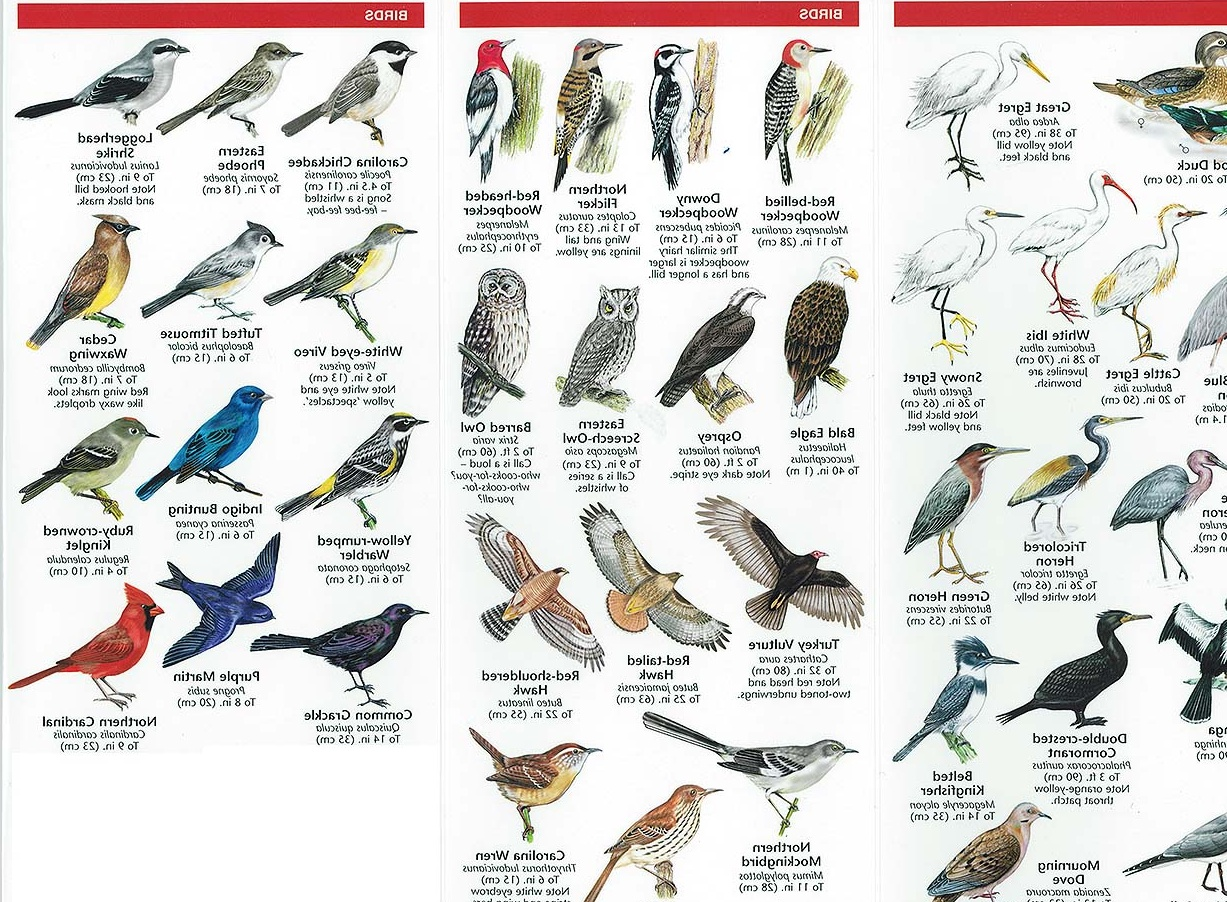 bird species identification - DriverLayer Search Engine