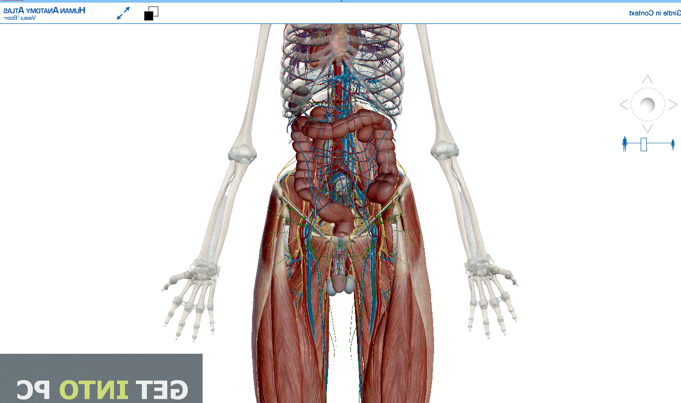 picture of the body anatomy