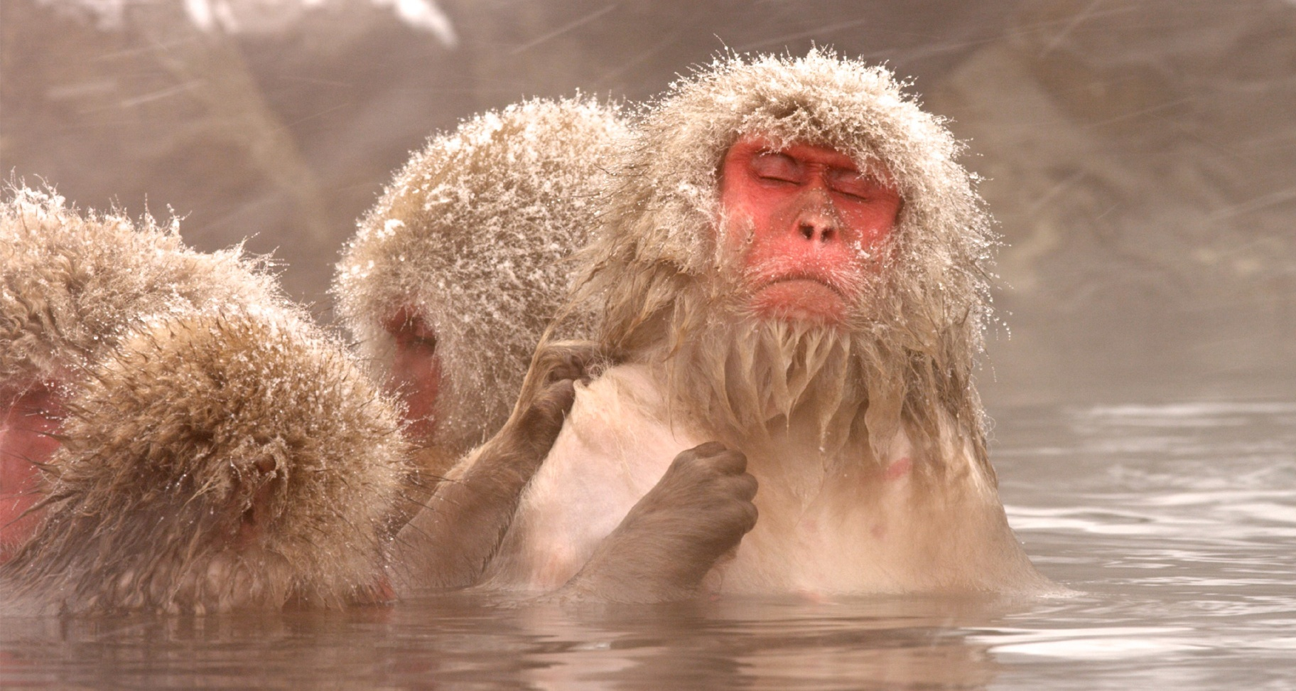 Snow Monkeys | Full Episode | Nature | PBS