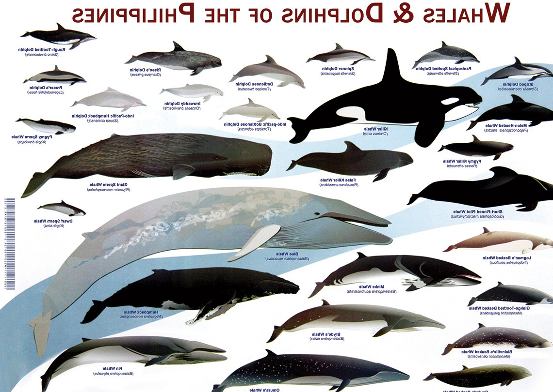 Types Of Whales Yes, there are killer whales