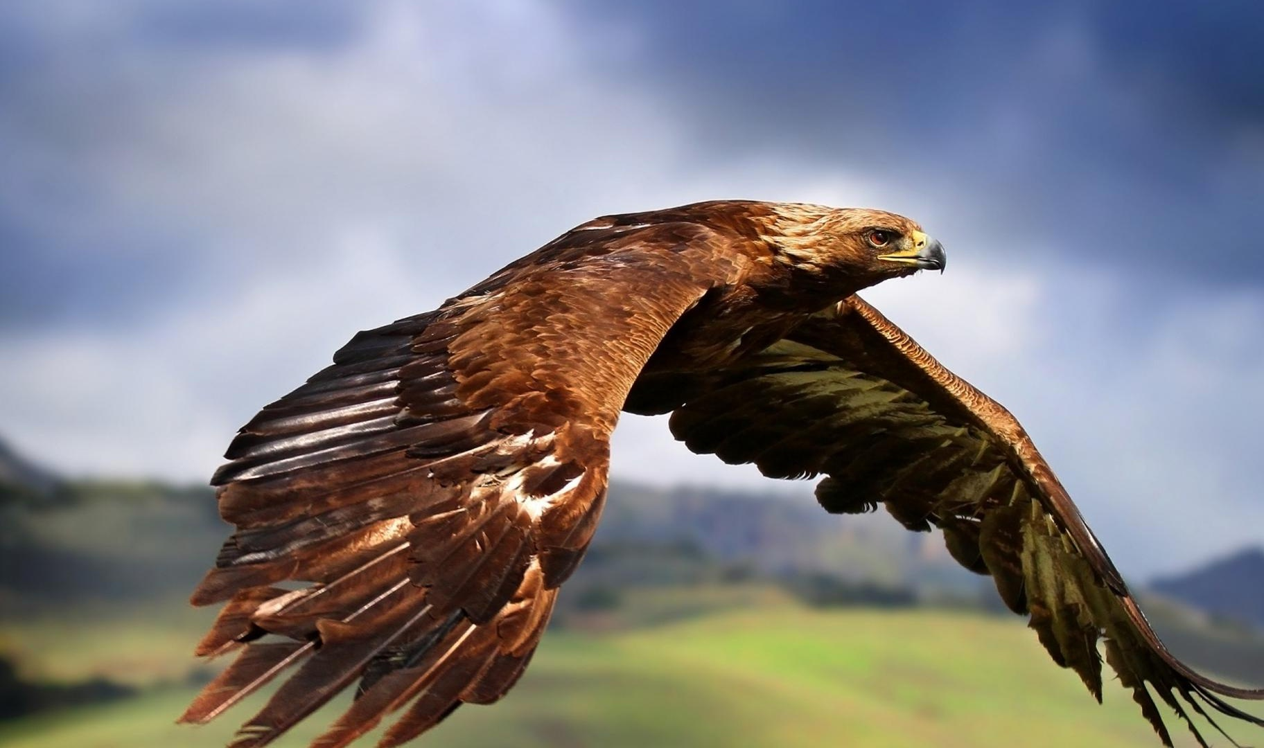 Golden Eagles Flying Wallpaper Gallery of Gold...