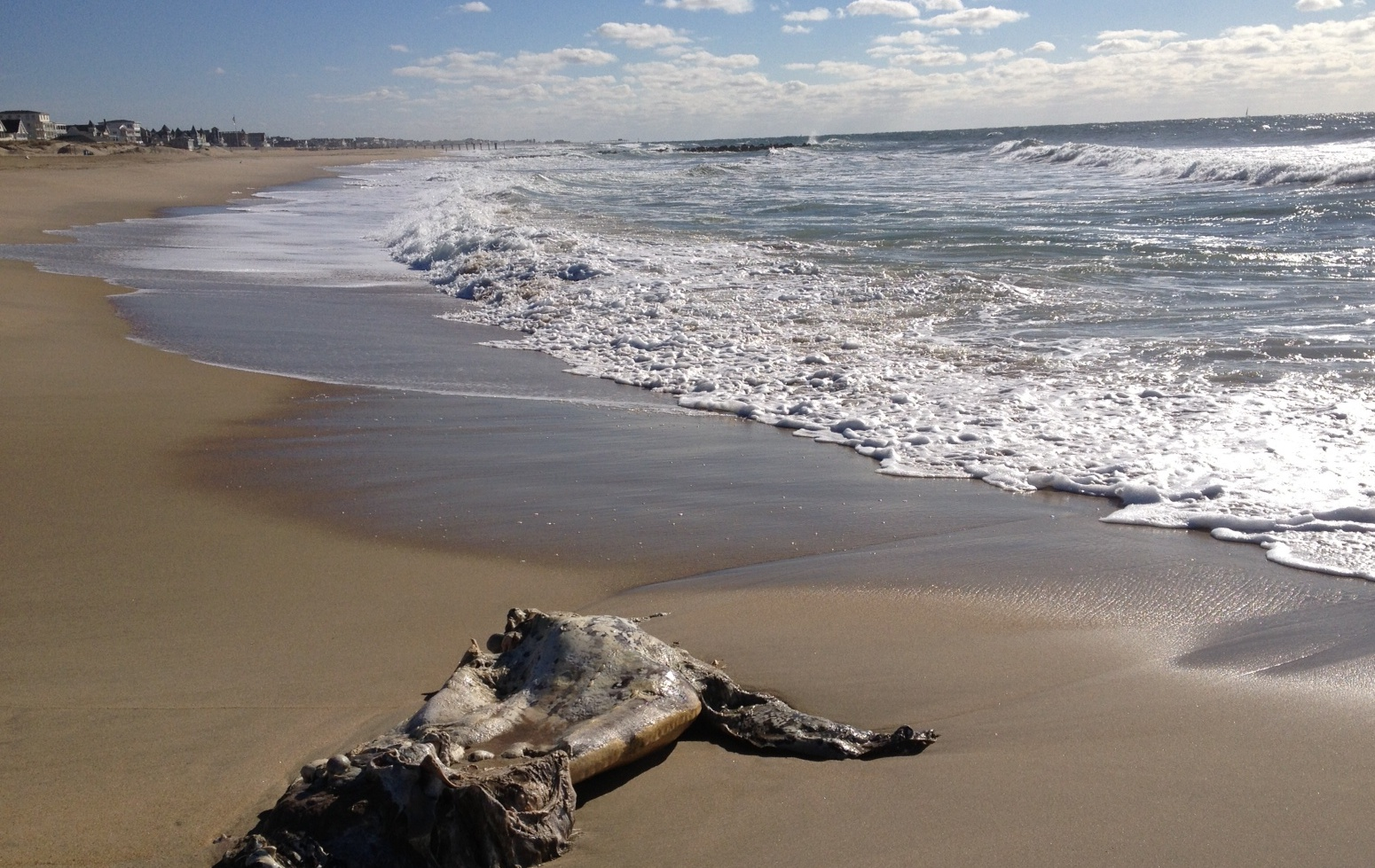 Video: Dead leatherback sea turtle on N.J. beach | EnviroGuyEnviroGuy