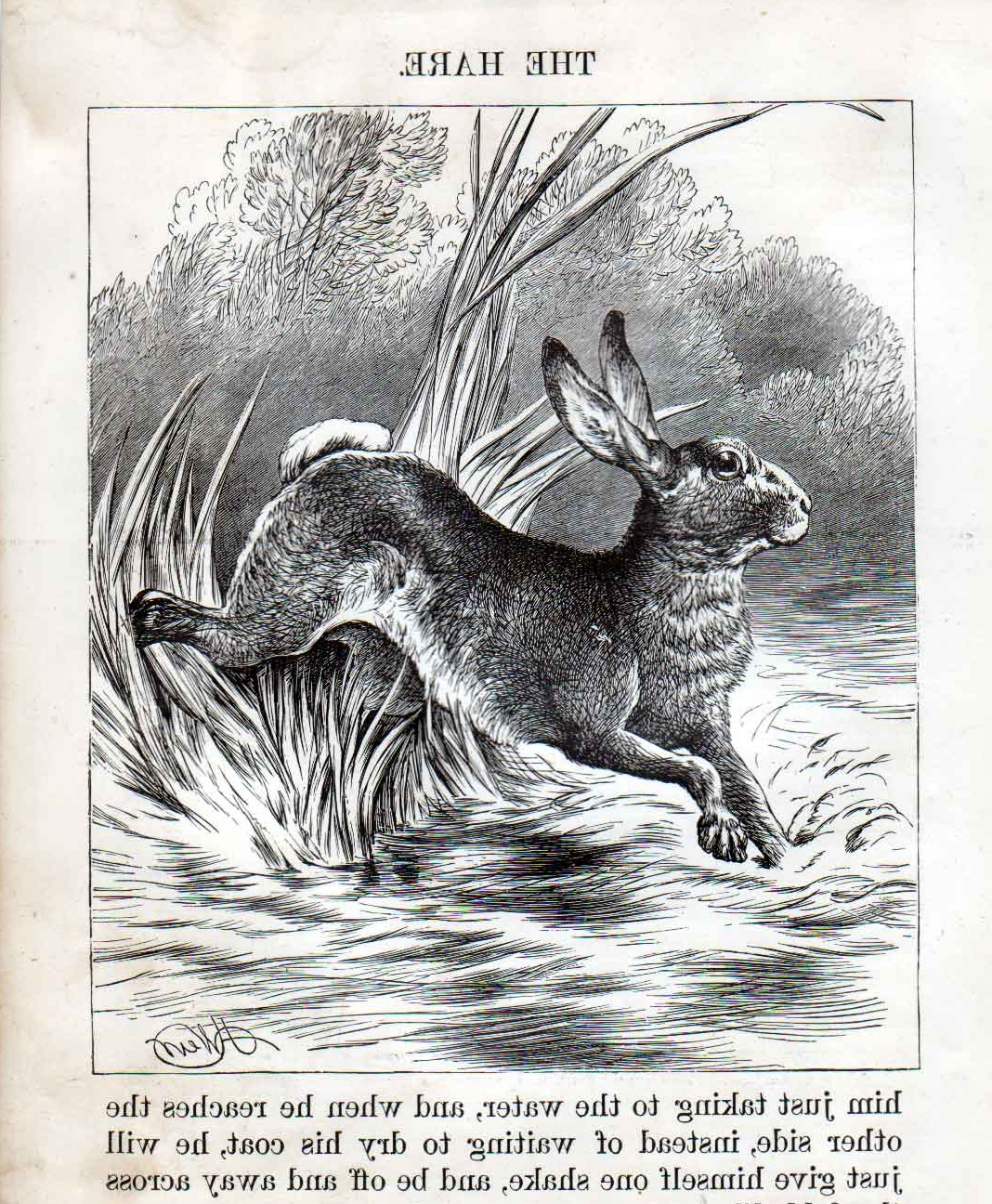 Some Cool Antique/Vintage Images » Hare print