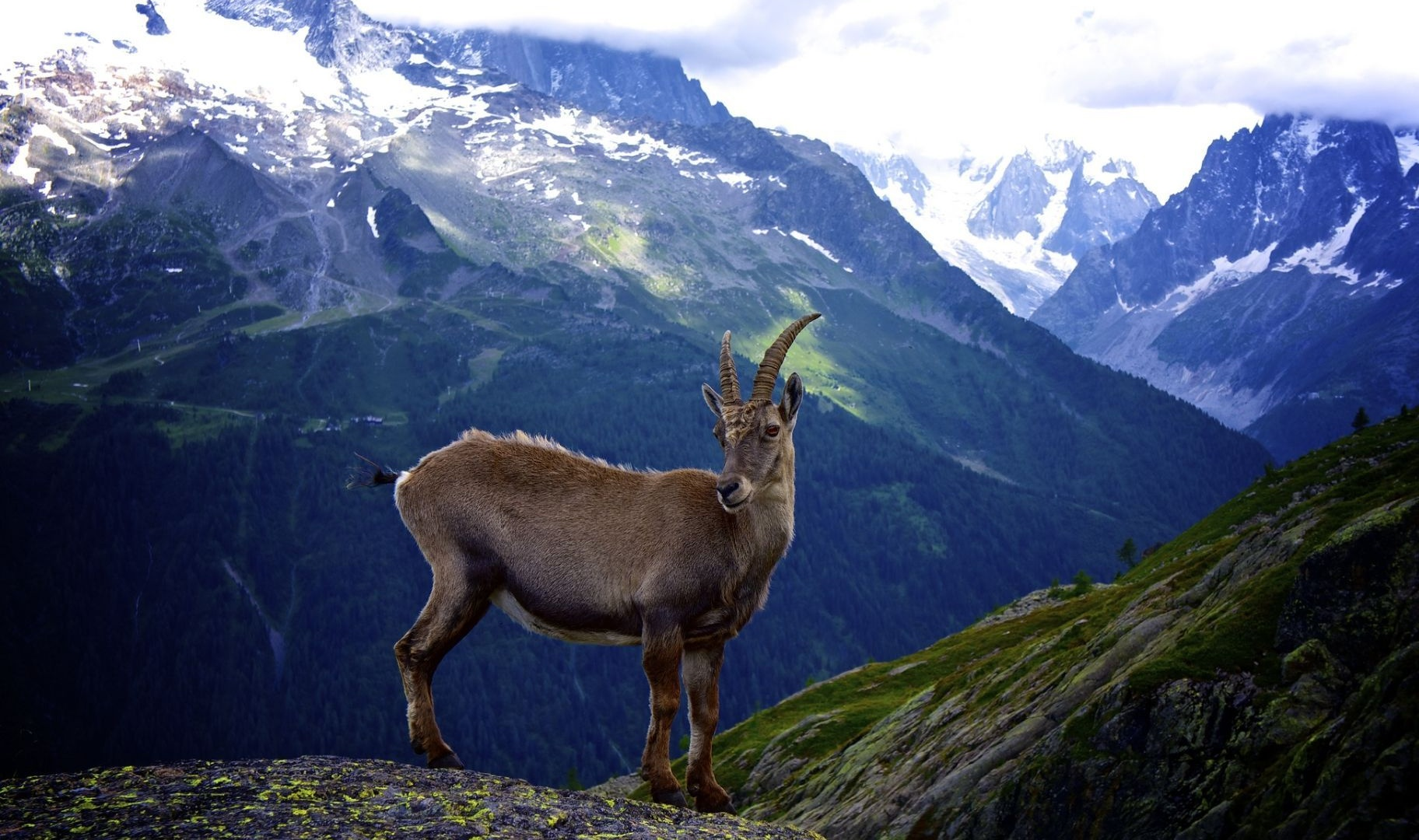 fav 0 rate 0 tweet 1920x1200 animals mountain mountain goat goat ...