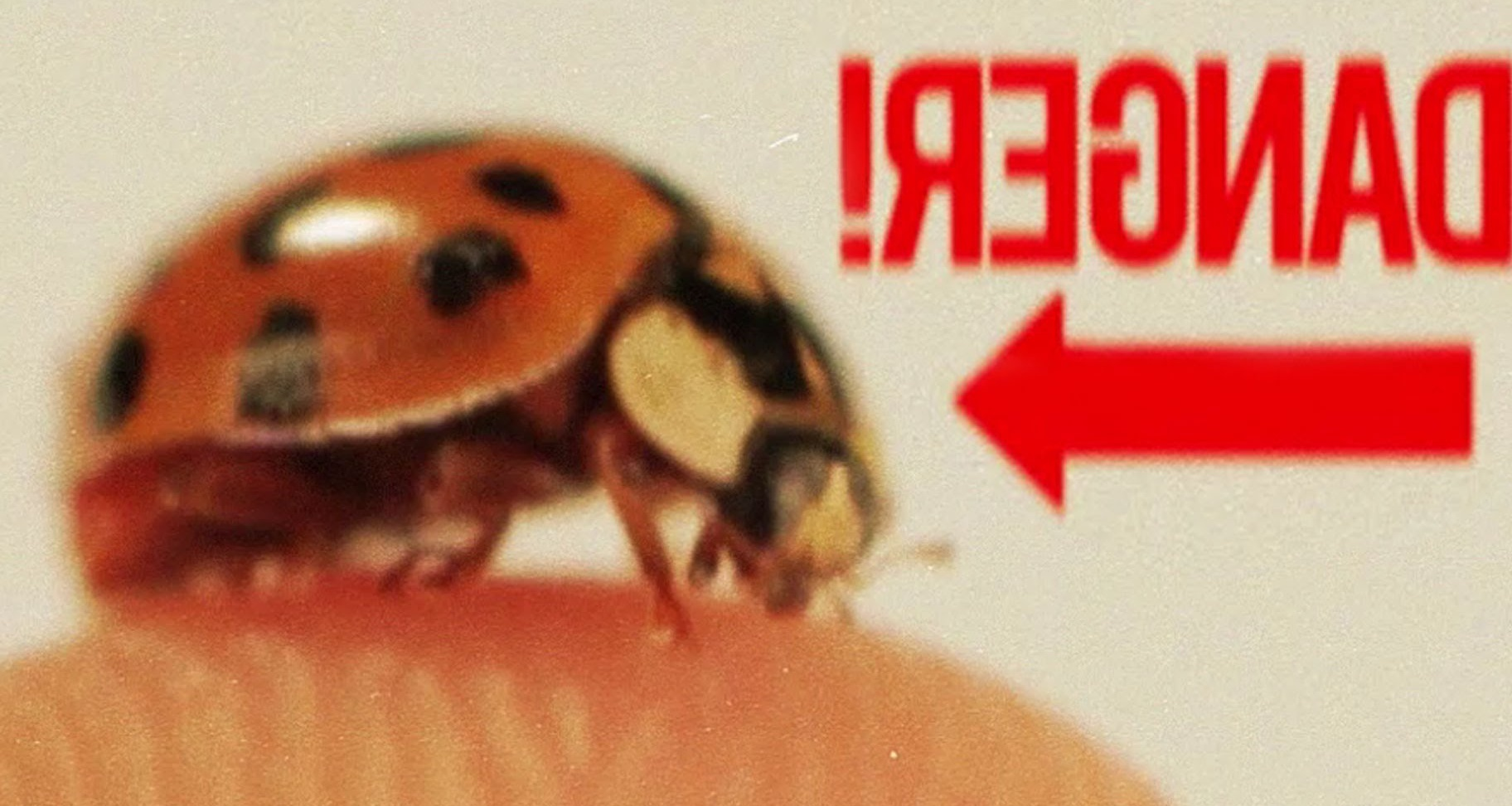 Craziest Ladybug Facts | Animalist News | Animalist