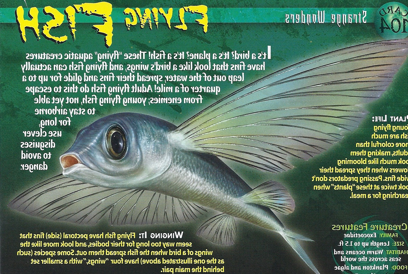 Flying Fish - Wierd N'wild Creatures Wiki