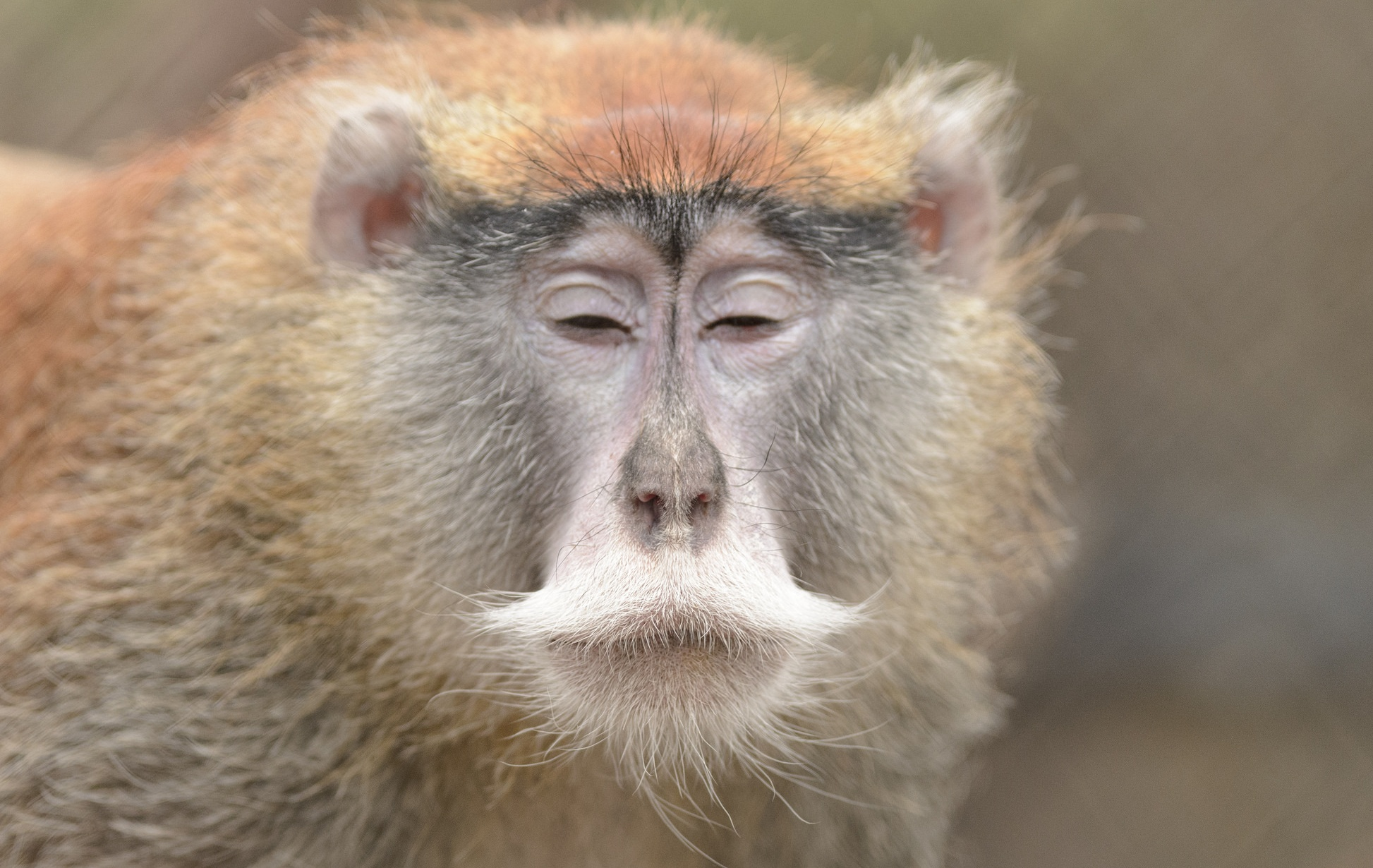 Patas Monkey Moment of Zen | Explore Eric Kilby's photos on ...