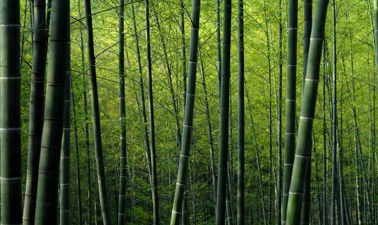 Home SlickGallery » Nature » bamboo