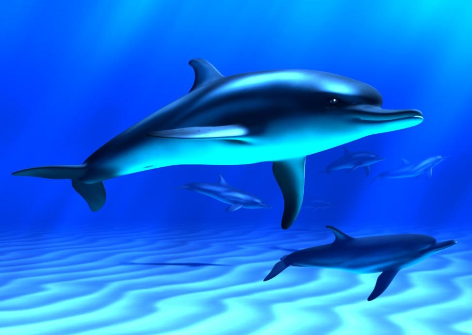 Dolphin Fish Hd Wallpapers Cool Desktop Background Widescreen ...