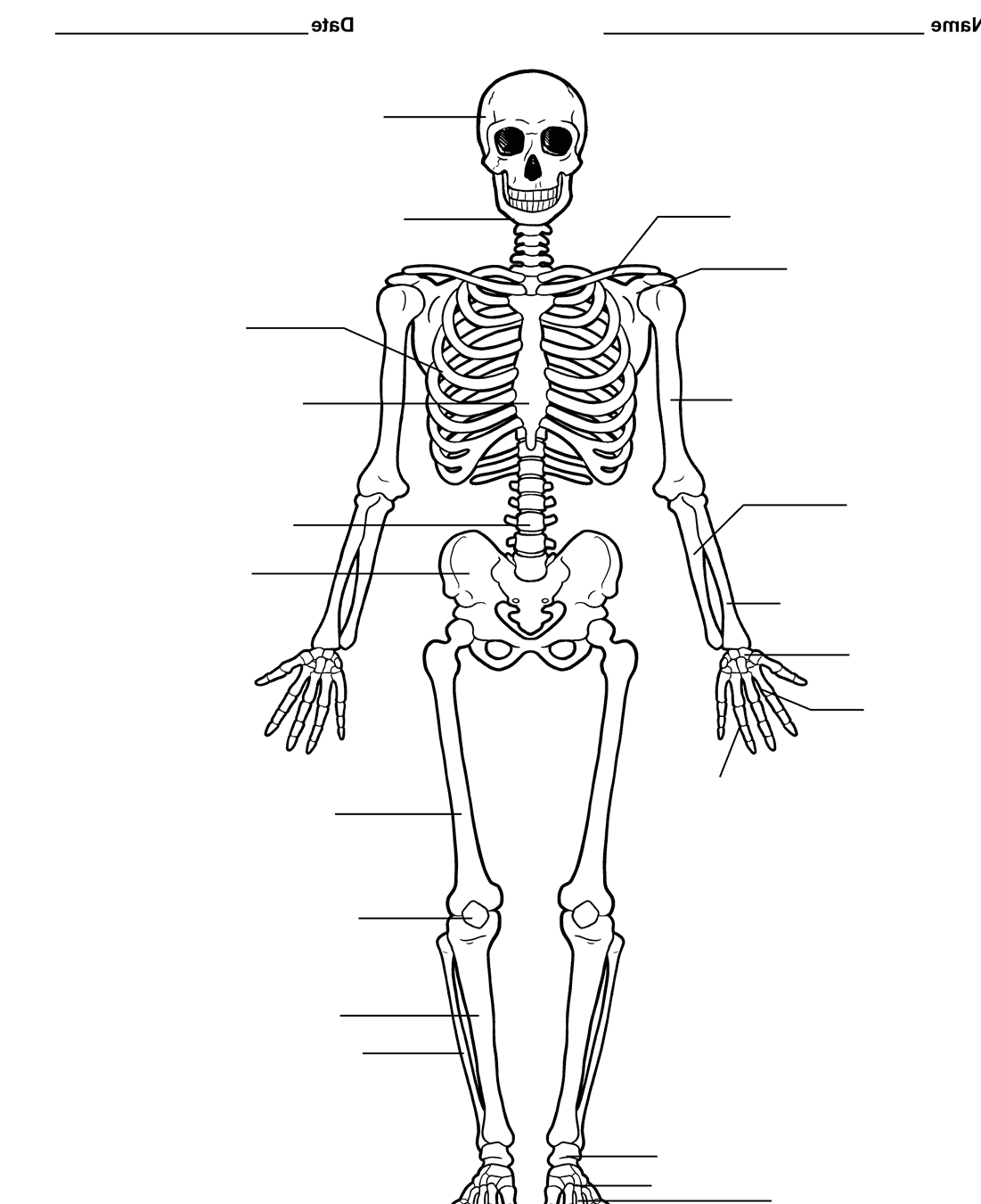 Pictures Of The Skeletal System Labeled 160e on fox diagram drawing