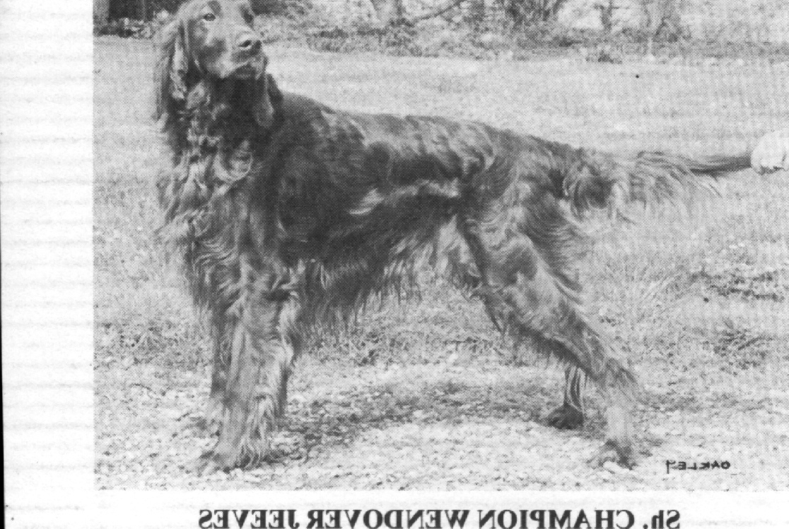 SH CH WENDOVER JEEVES « Hooley Irish Setters