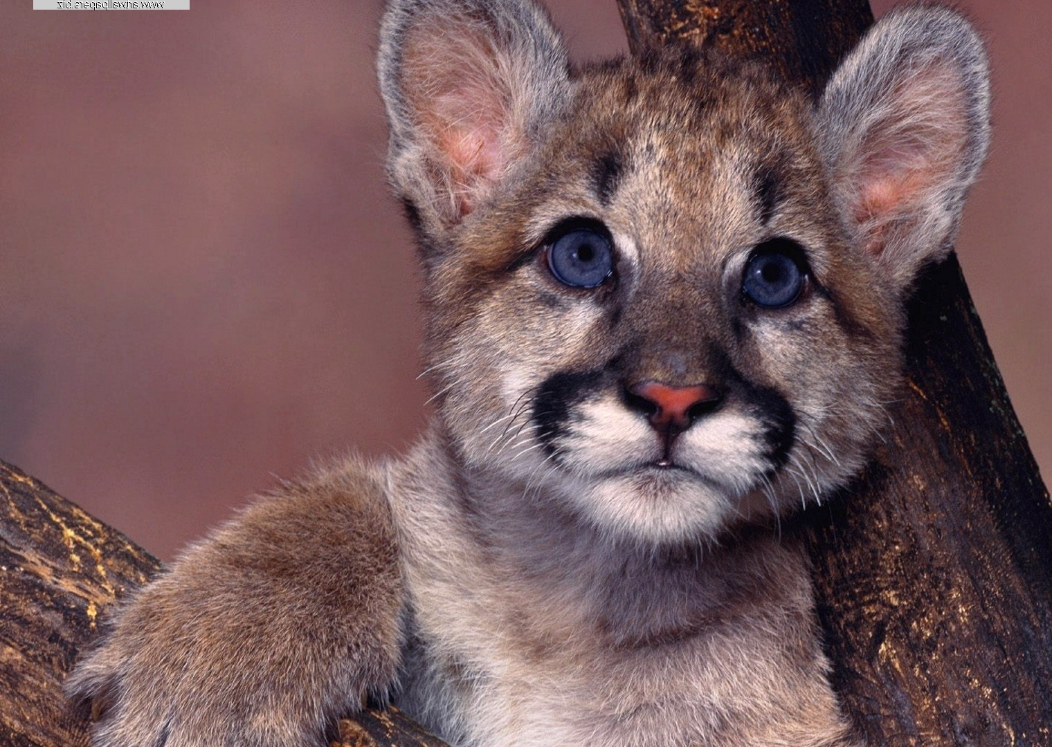 Wild Animals Wallpapers, Wild Animals Desktop Backgrounds, Computer ...