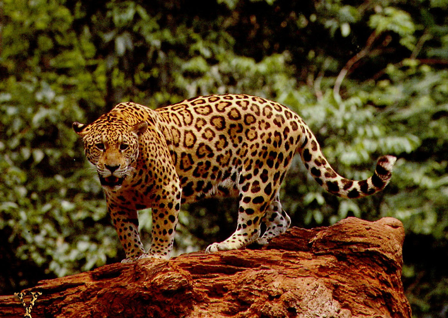 Great Jaguar Wallpapers | HD Wallpapers