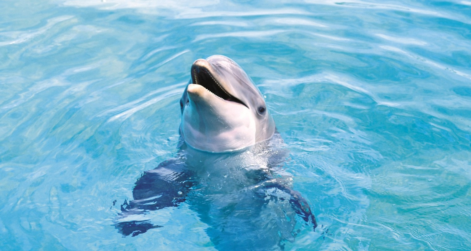 ... Dolphin Fish High Quality Wallpapers and Pictures. / Dolphin Fish HD