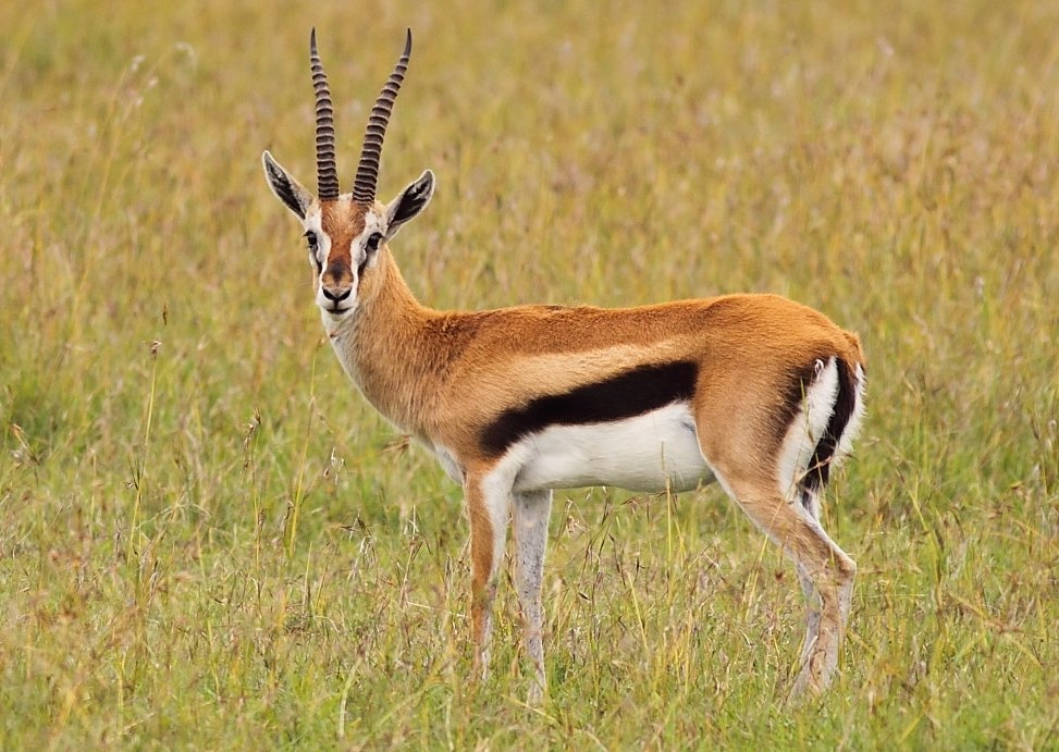 Antelope history and some interesting facts