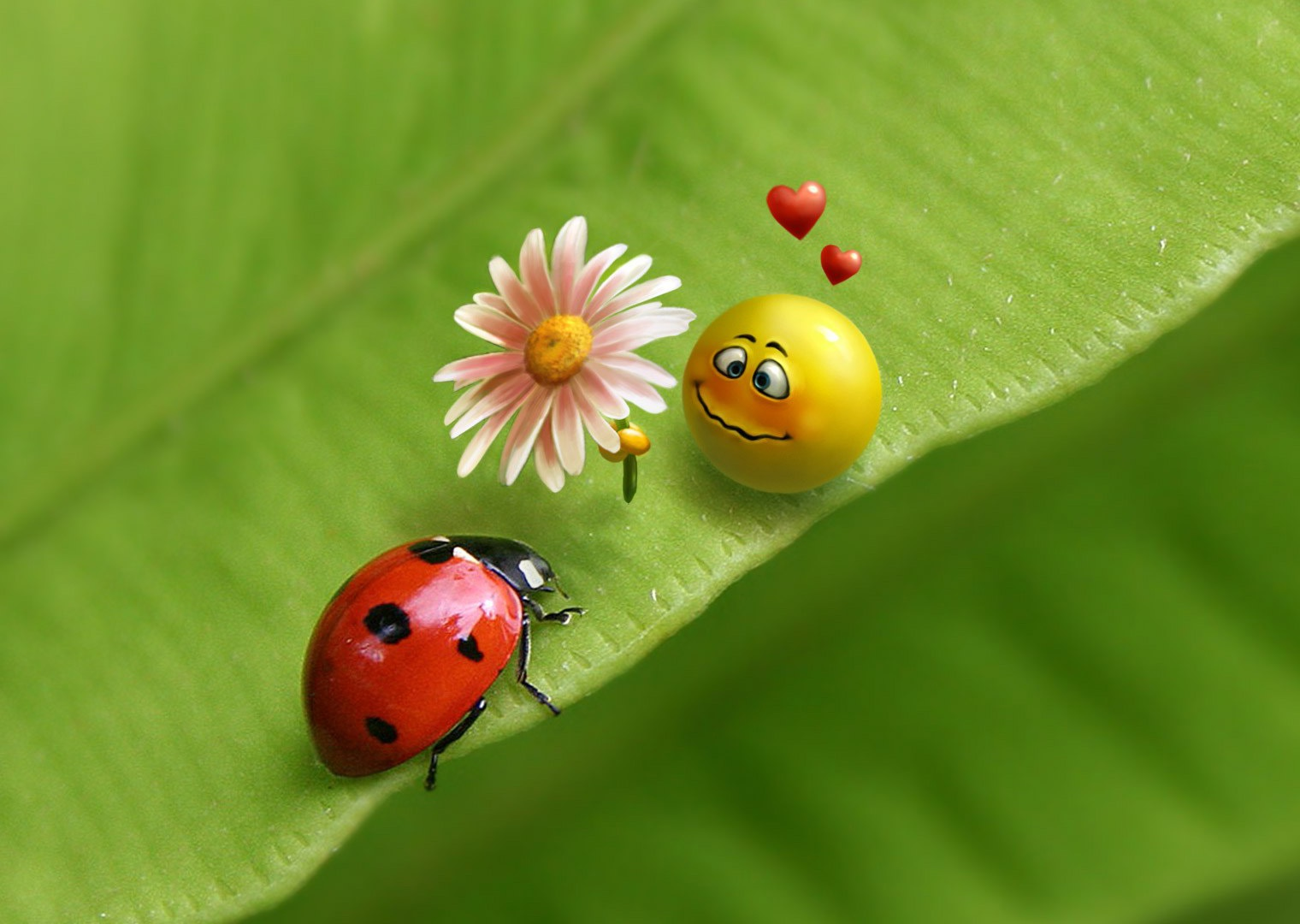 pictures of ladybugs